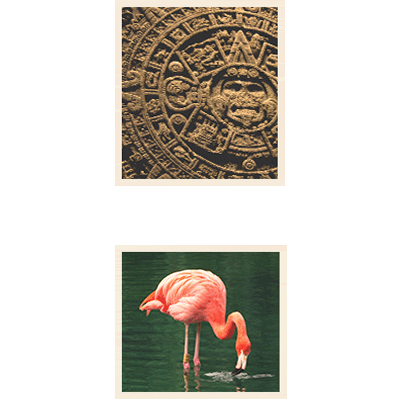 Aztec et flamand rose