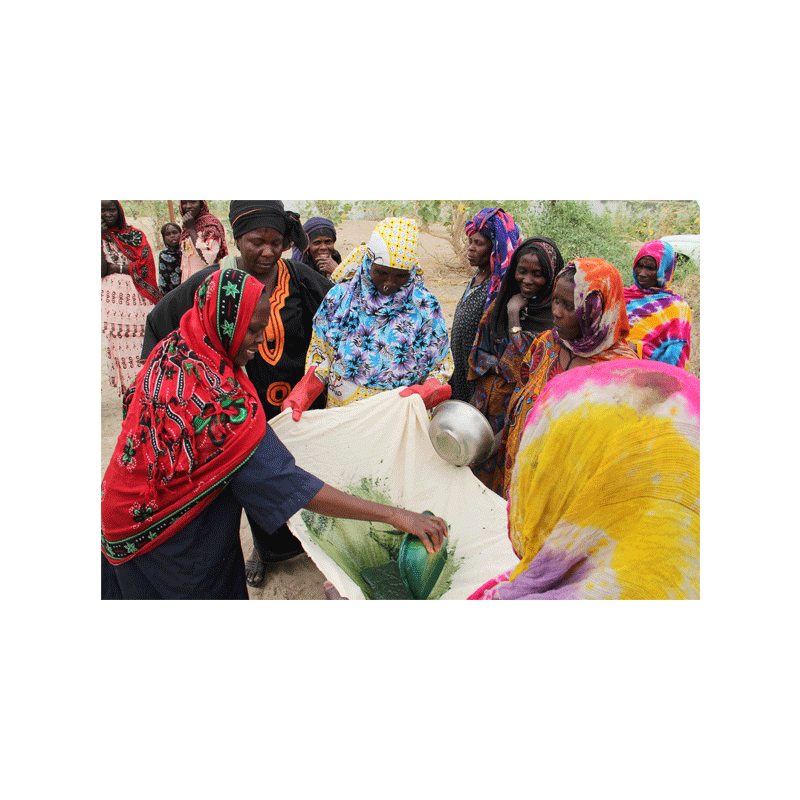 Filtration de spiruline au lac Tchad