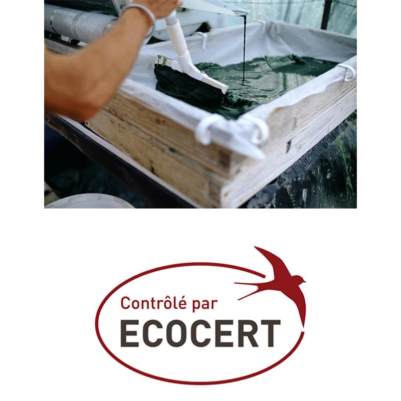 Récolte de spiruline et label Ecocert
