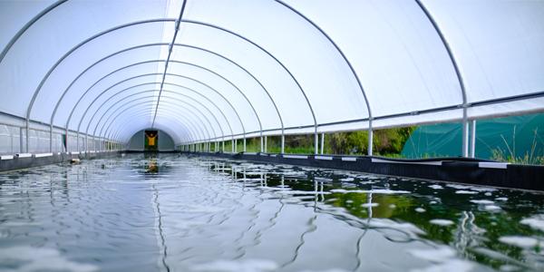 Bassin de spiruline nouvelle ferme