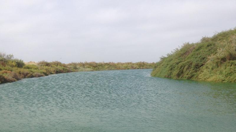 Lagune spiruline camargue